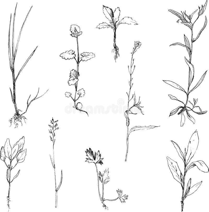 Insieme delle erbe e delle foglie del disegno a matita illustrazione di stock