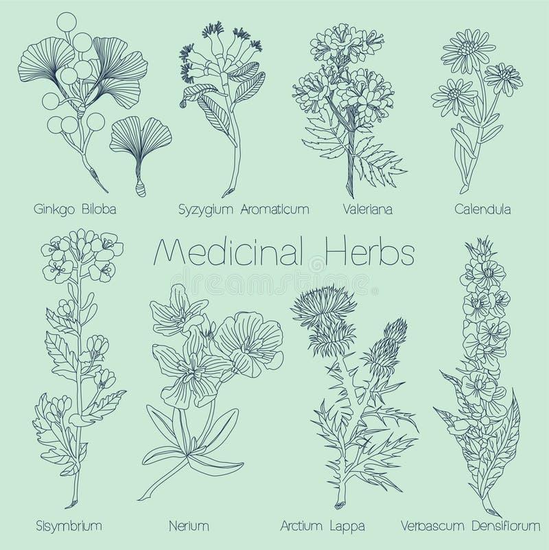 Insieme delle erbe mediche illustrazione di stock