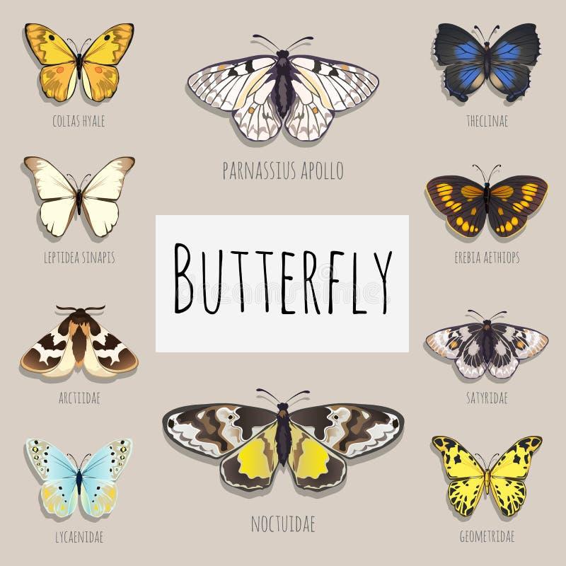 Insieme delle farfalle con spazio per testo illustrazione vettoriale