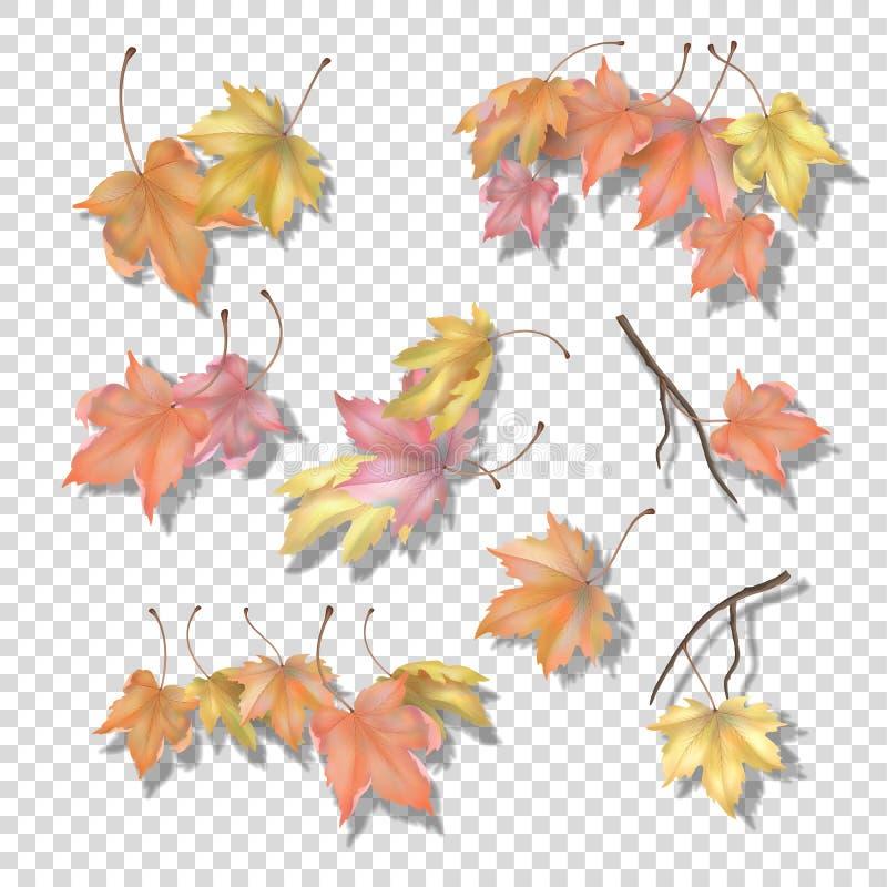 Insieme delle foglie di autunno dell'acero royalty illustrazione gratis