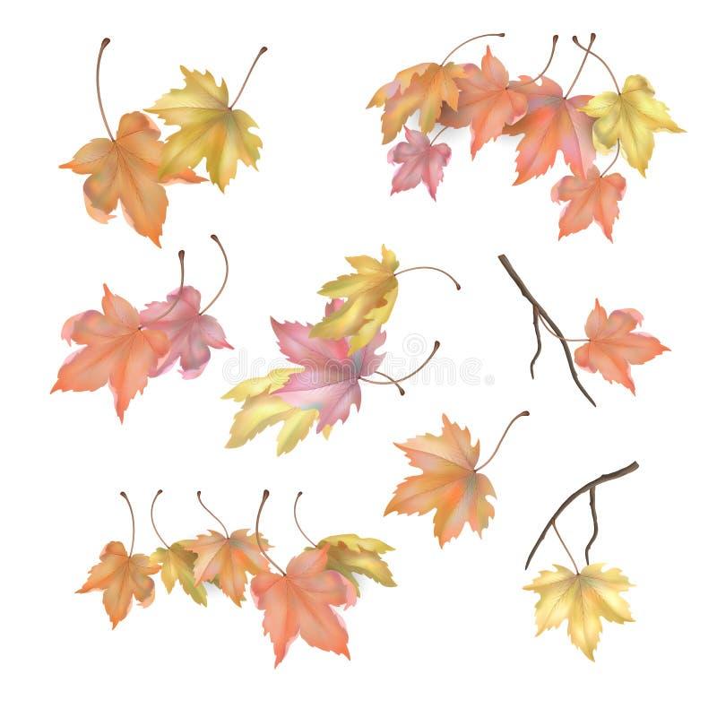Insieme delle foglie di autunno dell'acero illustrazione di stock