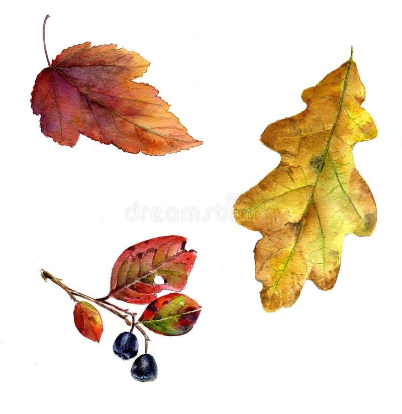 Insieme delle foglie di autunno, illustrazione dell'acquerello fotografia stock