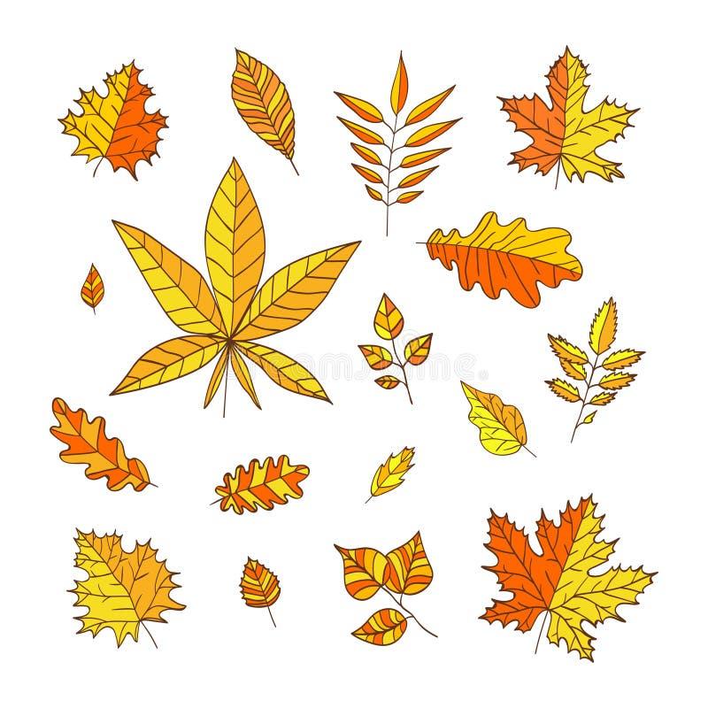 Insieme delle foglie di autunno variopinte su fondo bianco Foglie di autunno per gli inviti, cartoline d'auguri, insegne, certifi royalty illustrazione gratis