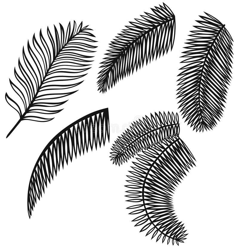 Insieme delle foglie di palma illustrazione vettoriale