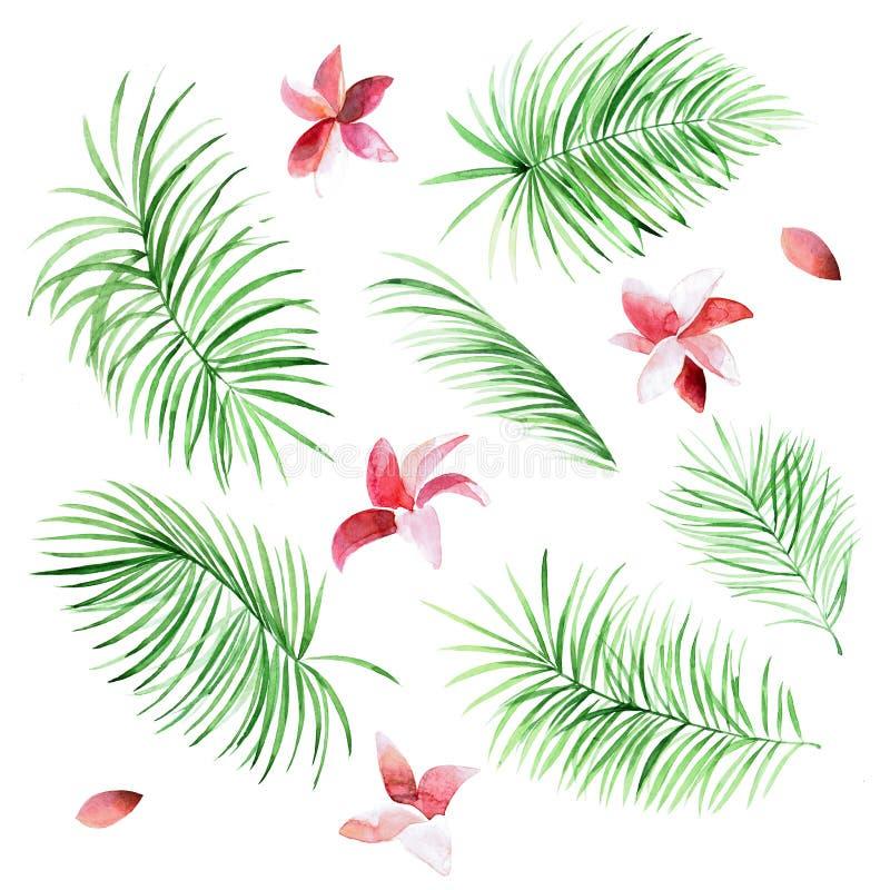 Insieme delle foglie di palma e dei fiori dell'acquerello su fondo bianco royalty illustrazione gratis