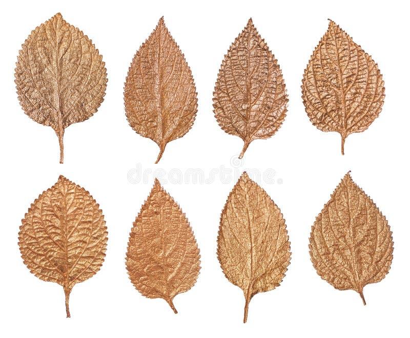 Insieme delle foglie dorate isolate su fondo bianco Piante dipinte a mano fotografia stock