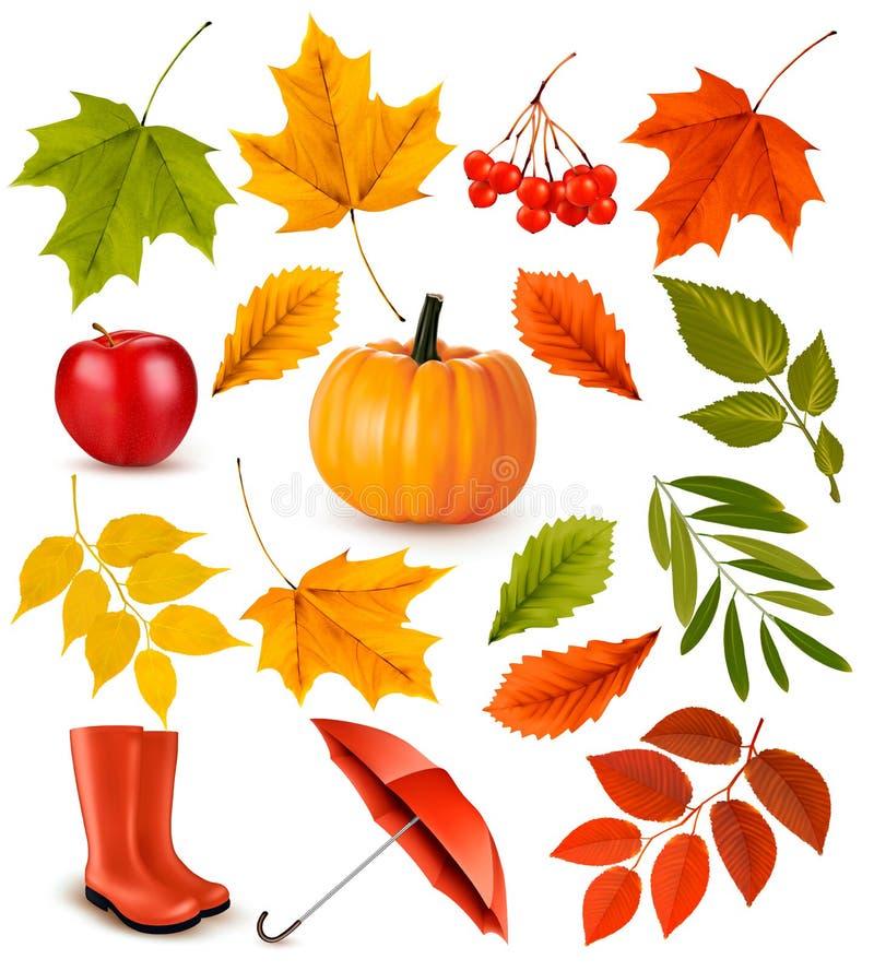 Insieme delle foglie e degli oggetti di autunno variopinte illustrazione di stock
