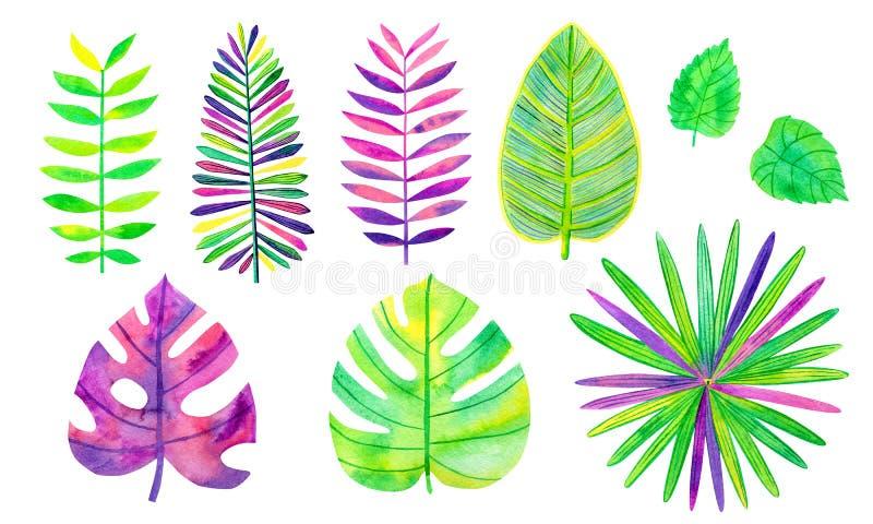 Insieme delle foglie tropicali dell'acquerello Monstera e foglia di palma nei colori vibranti Giungla verde, viola e gialla Flore royalty illustrazione gratis