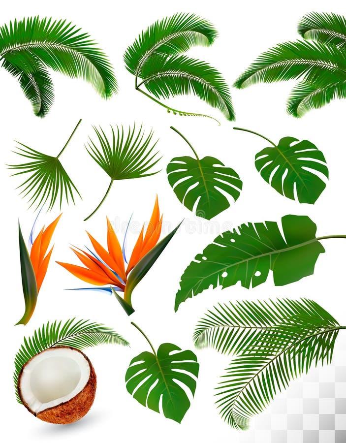 Insieme delle foglie tropicali e dei fiori esotici royalty illustrazione gratis