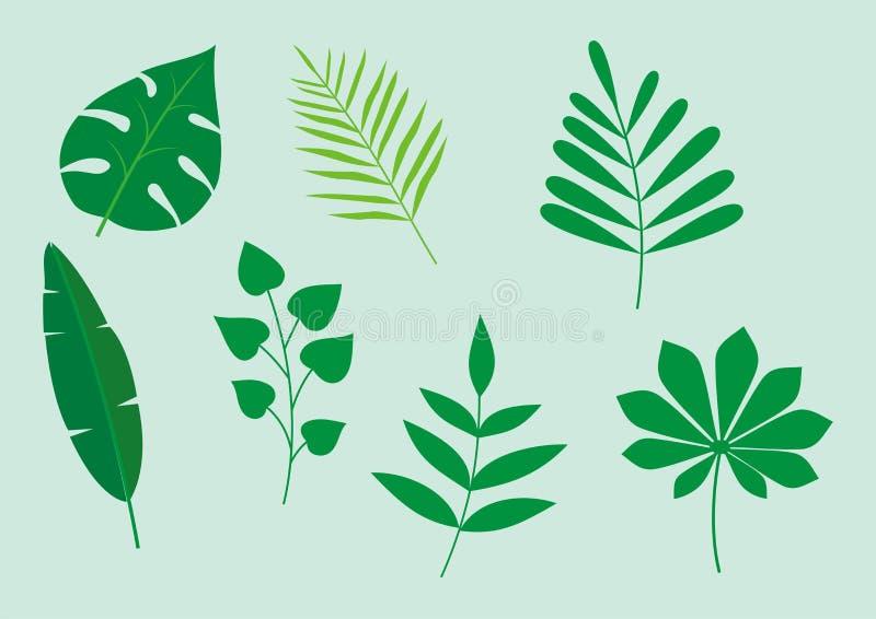 Insieme delle foglie tropicali, illustrazione di vettore di vettore della foglia illustrazione vettoriale