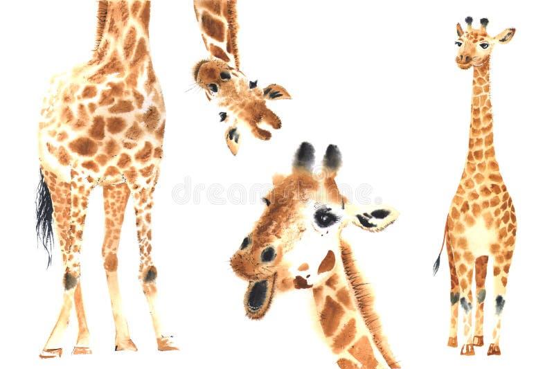 Insieme delle giraffe dell'acquerello illustrazione di stock
