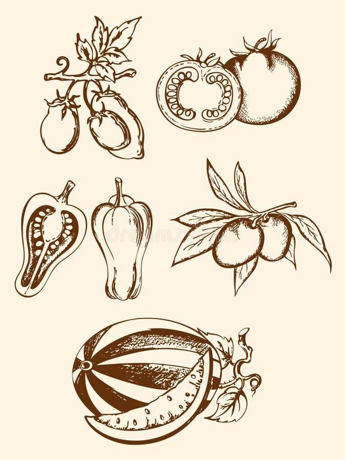 Insieme delle icone della verdura dell'annata illustrazione vettoriale