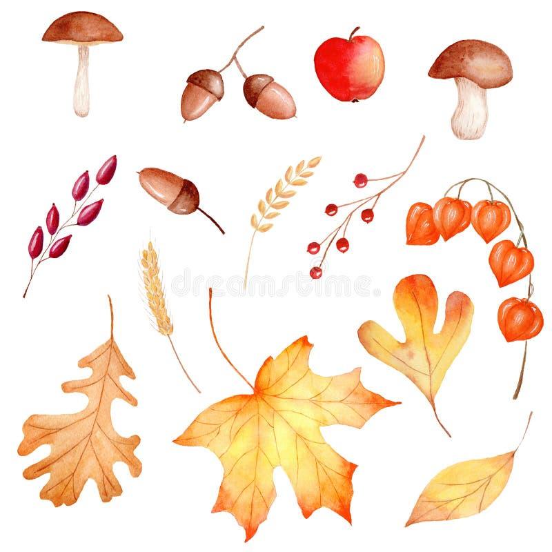 Insieme delle illustrazioni del quadro televisivo dell'acquerello della flora della foresta di stagione di autunno fotografia stock