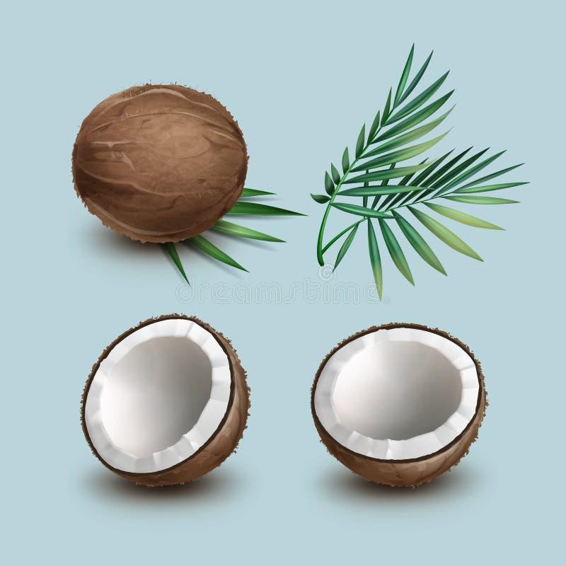 Insieme delle noci di cocco illustrazione di stock