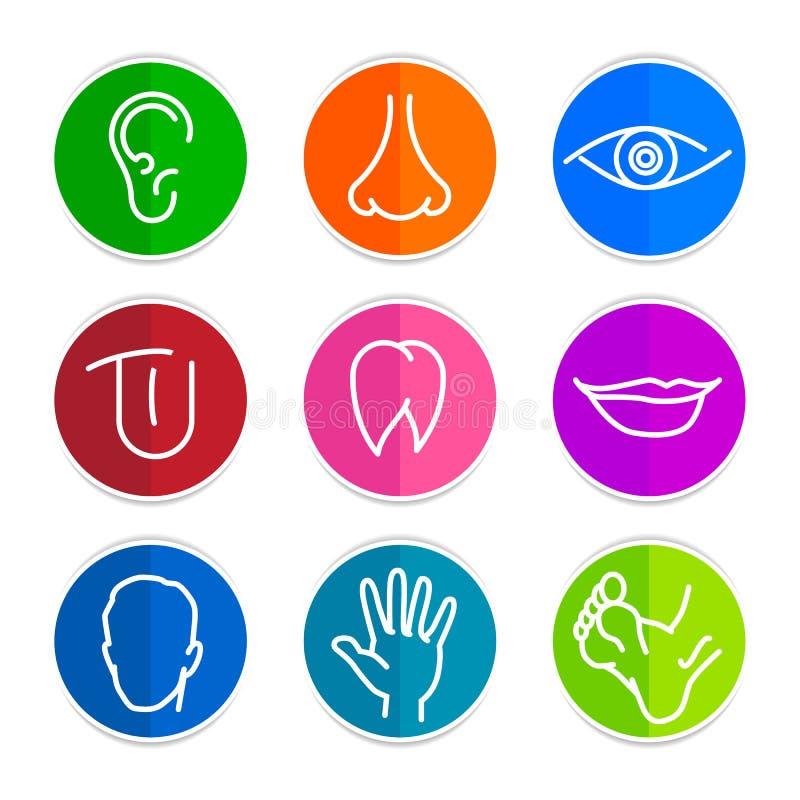 Insieme delle parti del corpo dell'essere umano delle icone royalty illustrazione gratis