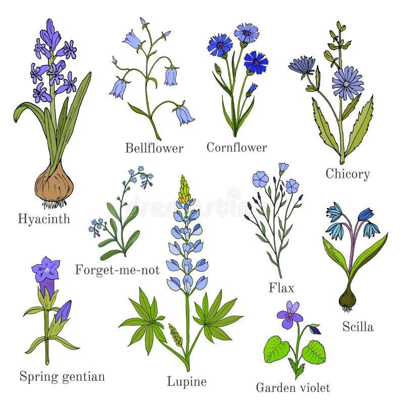 Insieme delle piante blu dei fiori royalty illustrazione gratis