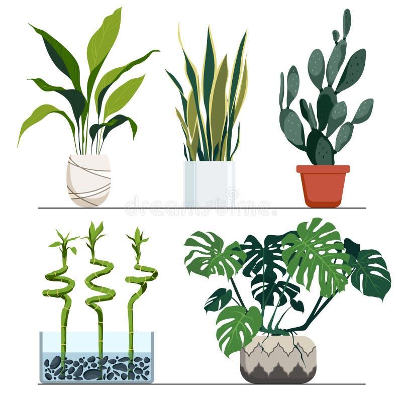 Insieme delle piante d'appartamento in vasi Illustrazione disegnata a mano di vettore Decorazione domestica moderna ed elegante royalty illustrazione gratis