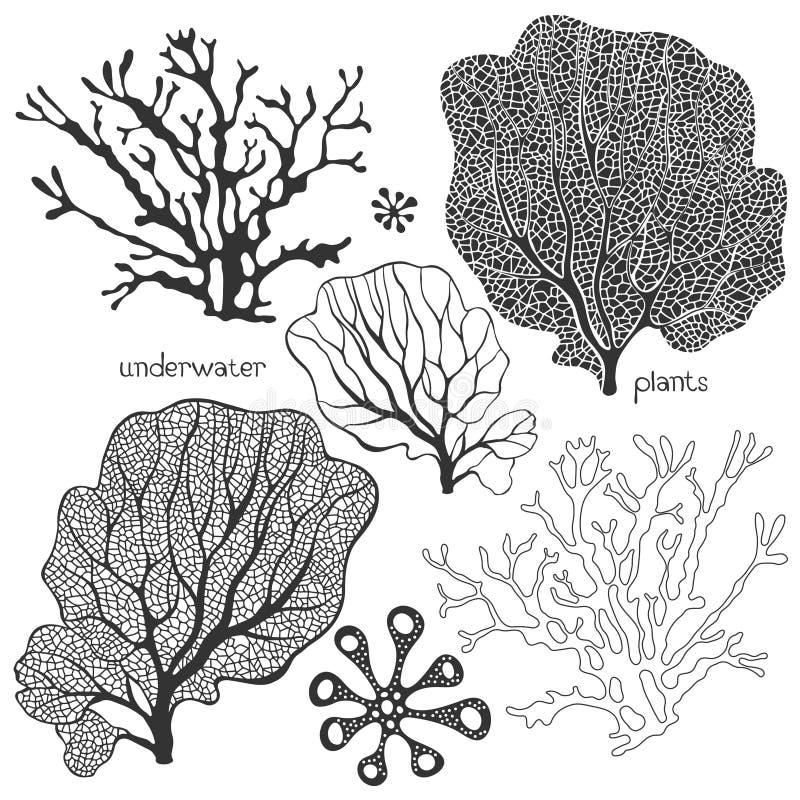 Insieme delle piante subacquee del fumetto Coralli e alg isolati vettore illustrazione di stock
