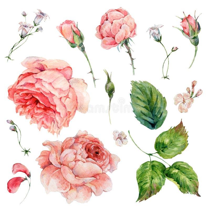Insieme delle rose d'annata dell'acquerello illustrazione vettoriale