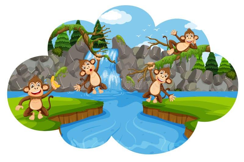 Insieme delle scimmie nella scena della natura illustrazione di stock