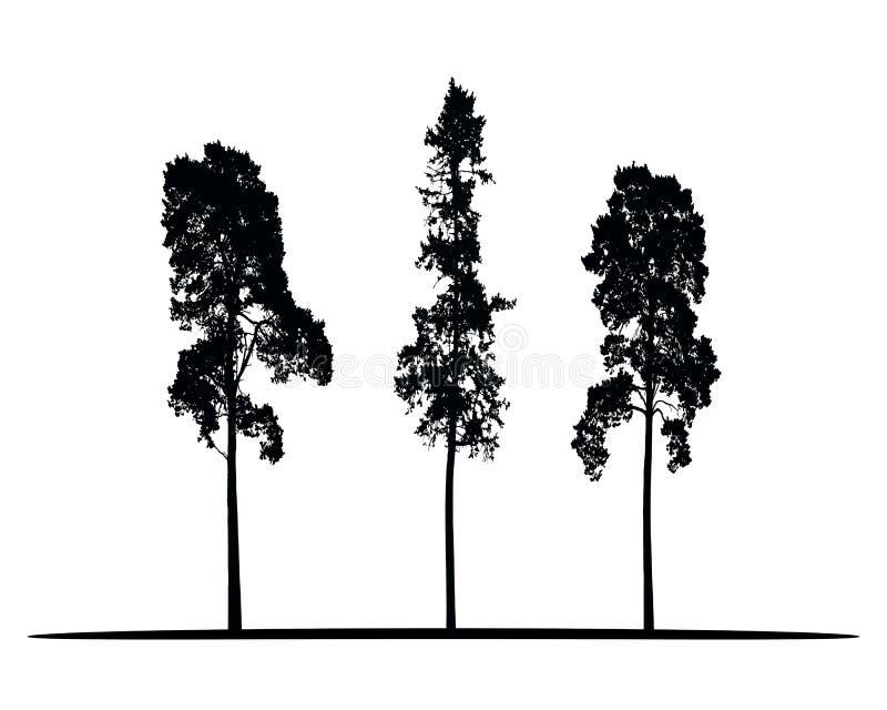 Insieme delle siluette di vettore di alte conifere illustrazione di stock