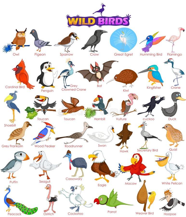 Insieme di ampia varietà di uccelli selvaggi royalty illustrazione gratis