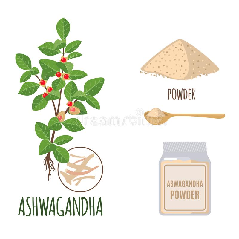 Insieme di Ashwagandha con polvere e radici nello stile piano isolate su bianco illustrazione di stock