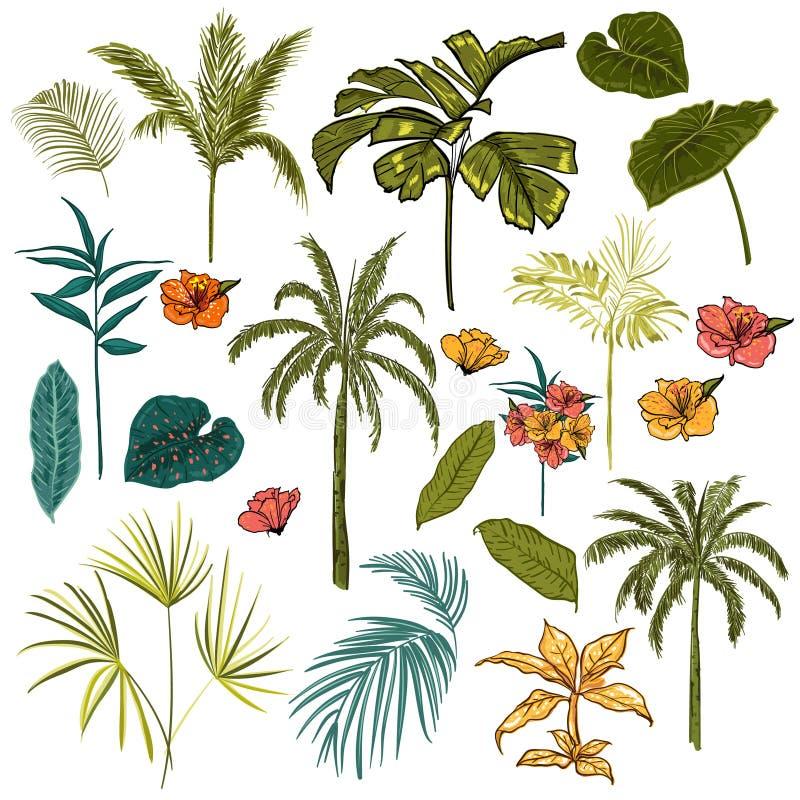 Insieme di bella mano che disegna tropicale artistico e prateria royalty illustrazione gratis