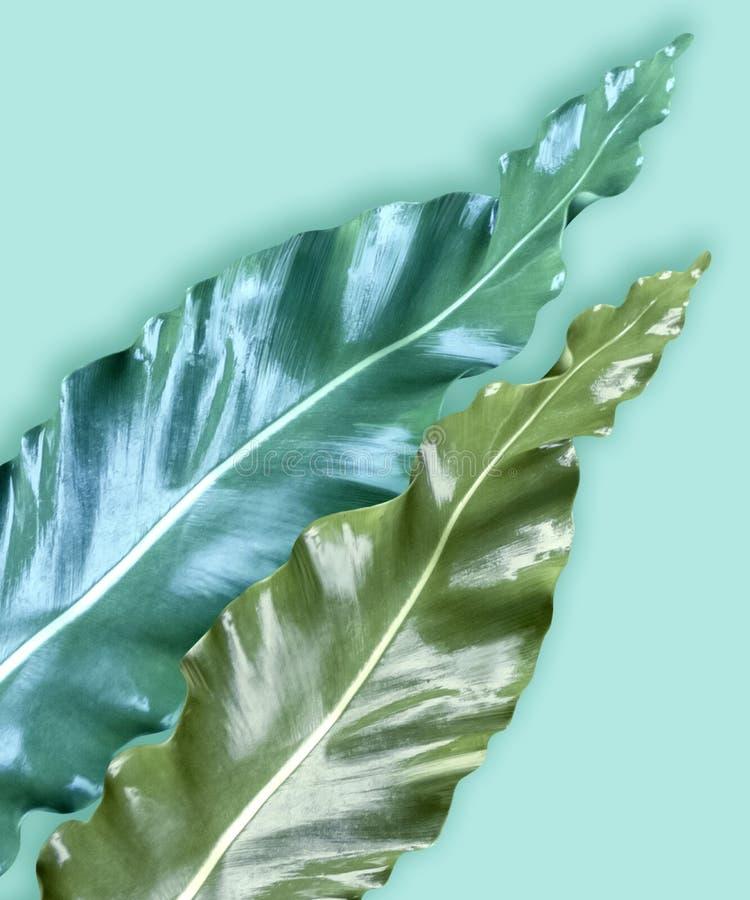 Insieme di carta verticale dell'invito con le foglie tropicali immagini stock libere da diritti