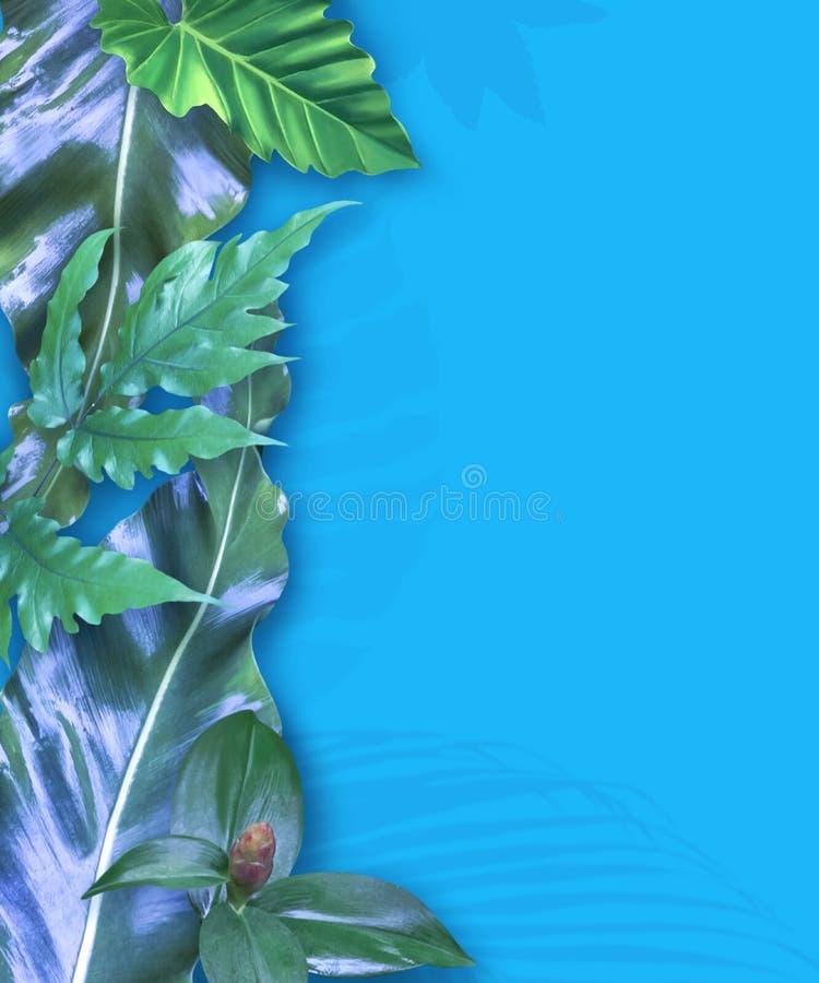 Insieme di carta verticale dell'invito con le foglie tropicali fotografia stock