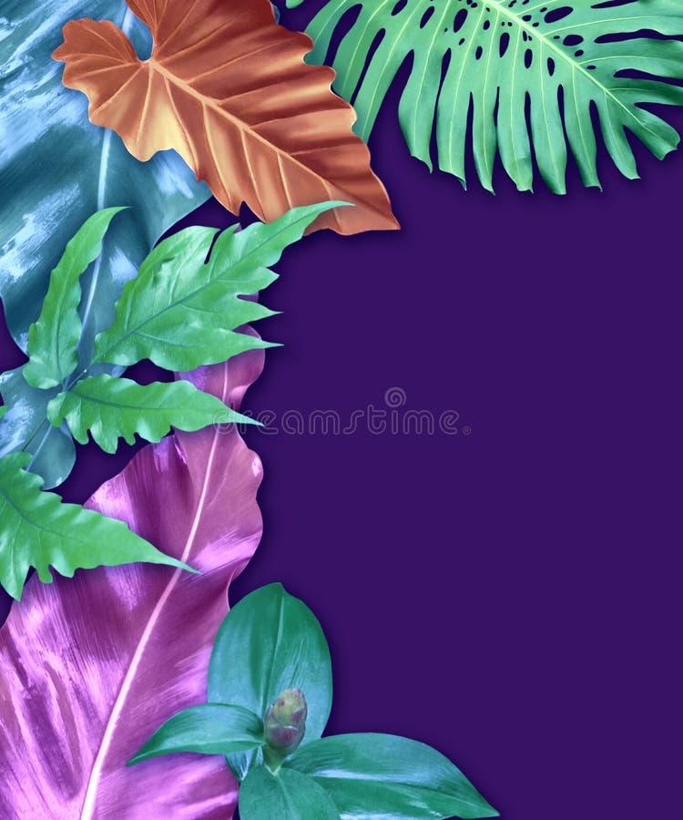 Insieme di carta verticale dell'invito con le foglie tropicali fotografia stock libera da diritti