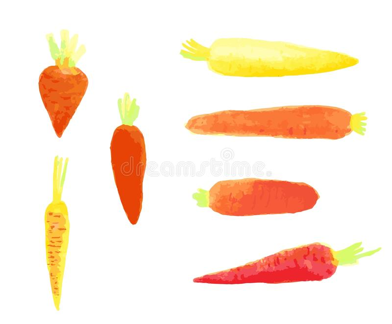 Insieme di disegno delle carote dell'acquerello illustrazione di stock