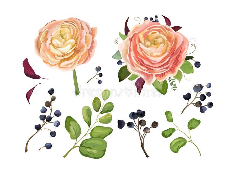 Insieme di elementi floreale di vettore grande: fiore rosa del ranunculus della pesca illustrazione vettoriale