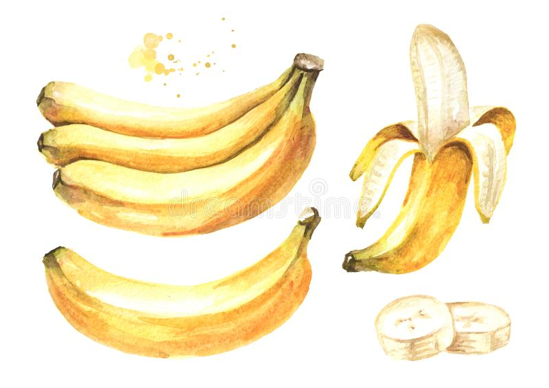 Insieme di elementi giallo maturo fresco della banana Illustrazione disegnata a mano dell'acquerello, isolata su fondo bianco royalty illustrazione gratis