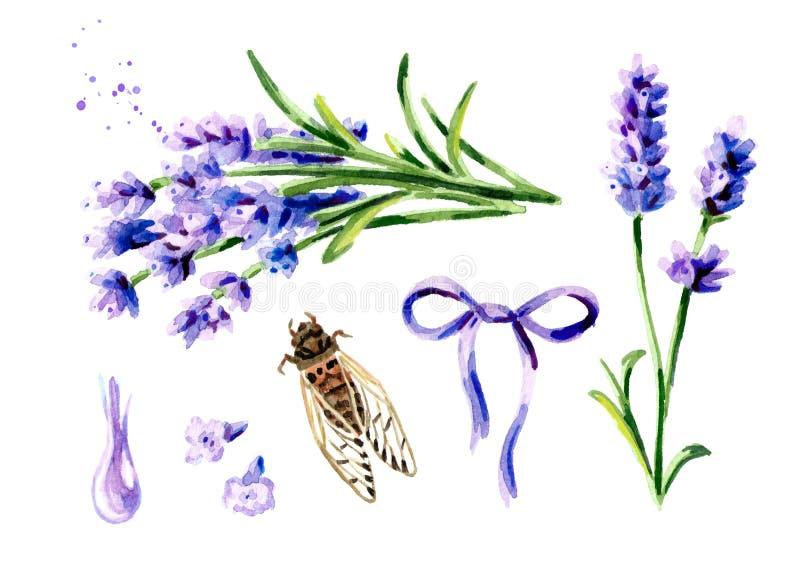 Insieme di estate della lavanda Illustrazione verticale disegnata a mano dell'acquerello, isolata su fondo bianco illustrazione vettoriale