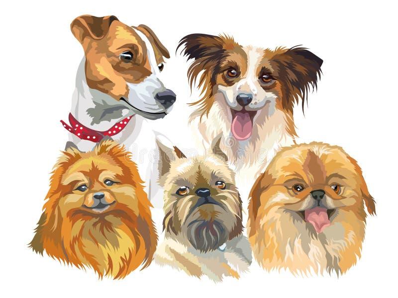 Insieme di piccole razze del cane royalty illustrazione gratis