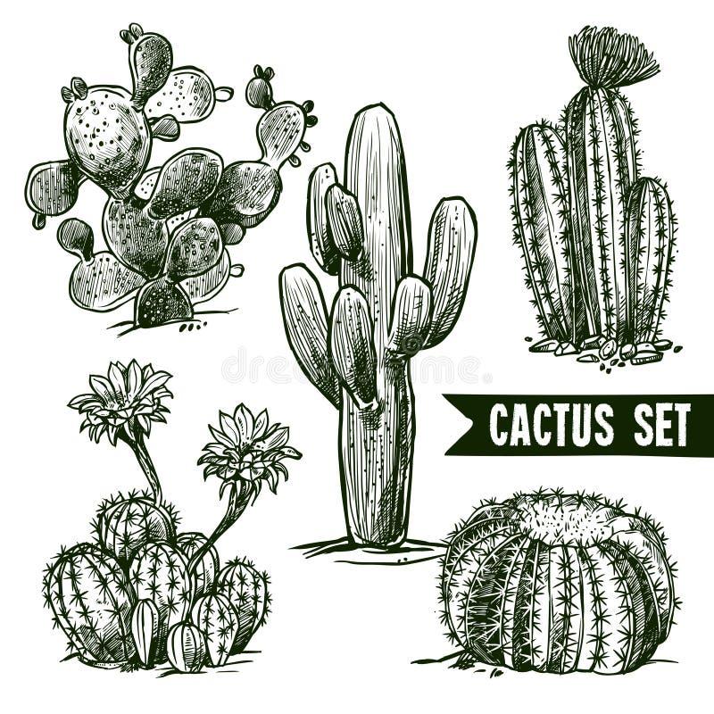 Insieme di schizzo del cactus illustrazione vettoriale