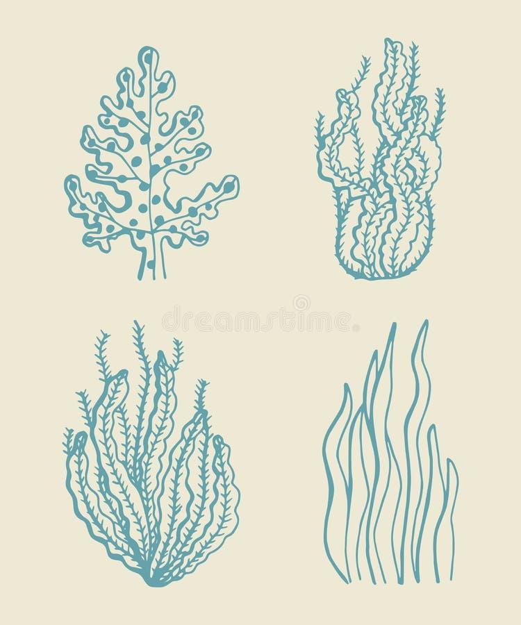 Insieme di schizzo di vettore dell'alga Illustrazione illustrazione di stock