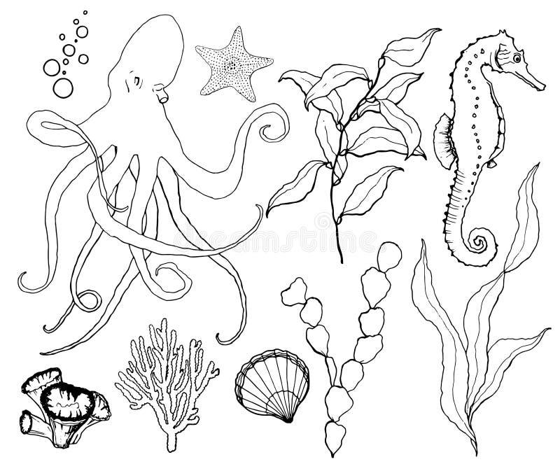 Insieme di schizzo di vettore con fauna selvatica subacquea Polipo, ippocampo, laminaria, stelle marine dipinte a mano e copertur illustrazione di stock