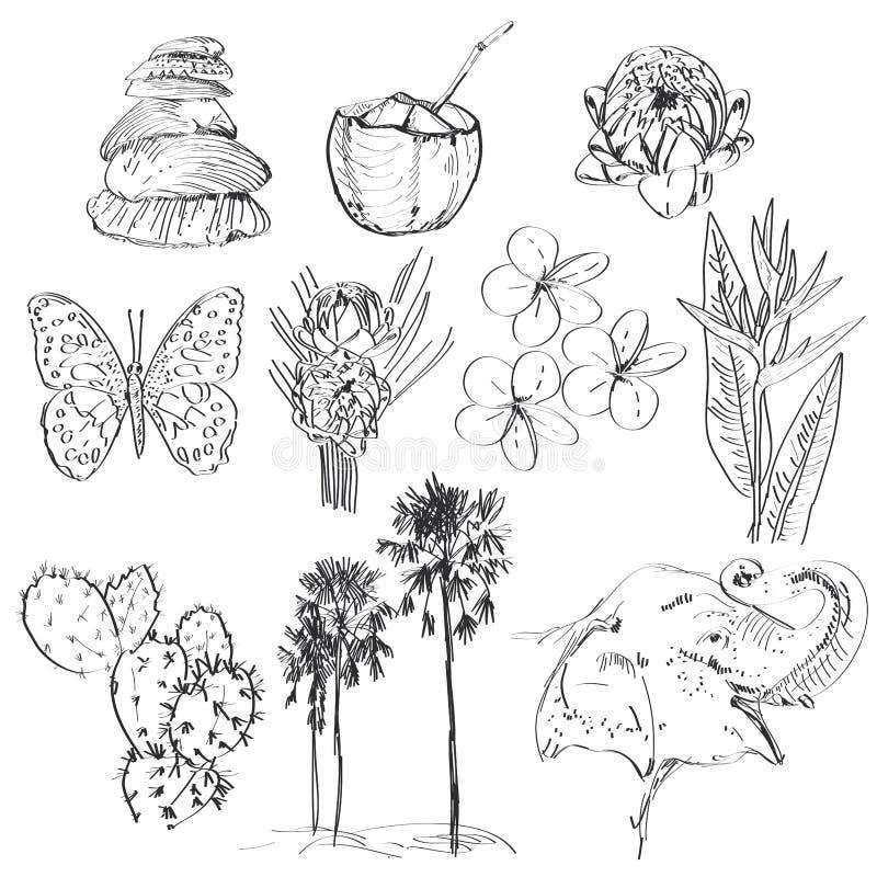 Insieme di strelizia, di plumeria, del loto, dell'elefante, della palma, della noce di cocco, del cactus, delle farfalle e delle