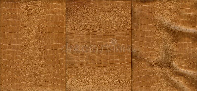Insieme di struttura marrone chiaro della pelle di coccodrillo fotografia stock libera da diritti