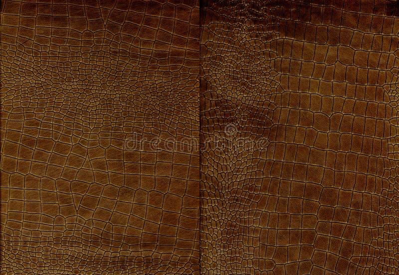 Insieme di struttura marrone della pelle di coccodrillo fotografia stock
