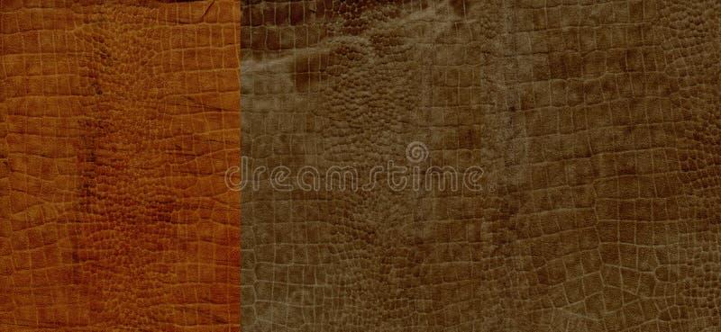 Insieme di struttura marrone della pelle scamosciato del coccodrillo immagini stock