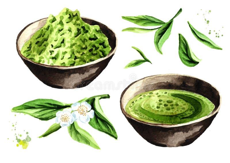 Insieme di tè verde organico di Matcha Illustrazione disegnata a mano dell'acquerello, isolata su fondo bianco royalty illustrazione gratis
