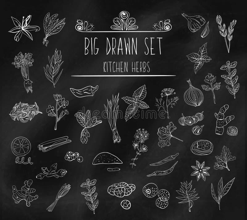 Insieme di vari scarabocchi, schizzi semplici approssimativi disegnati a mano di vari tipi di spezie ed erbe illustrazione vettoriale