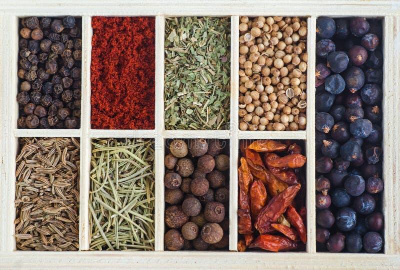 Insieme di vari spezie e condimento Alimento e fondo di cottura fotografia stock