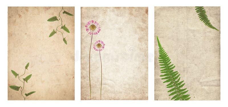 Insieme di varia vecchia struttura di carta d'annata con le piante asciutte ed il fiore isolati fotografie stock