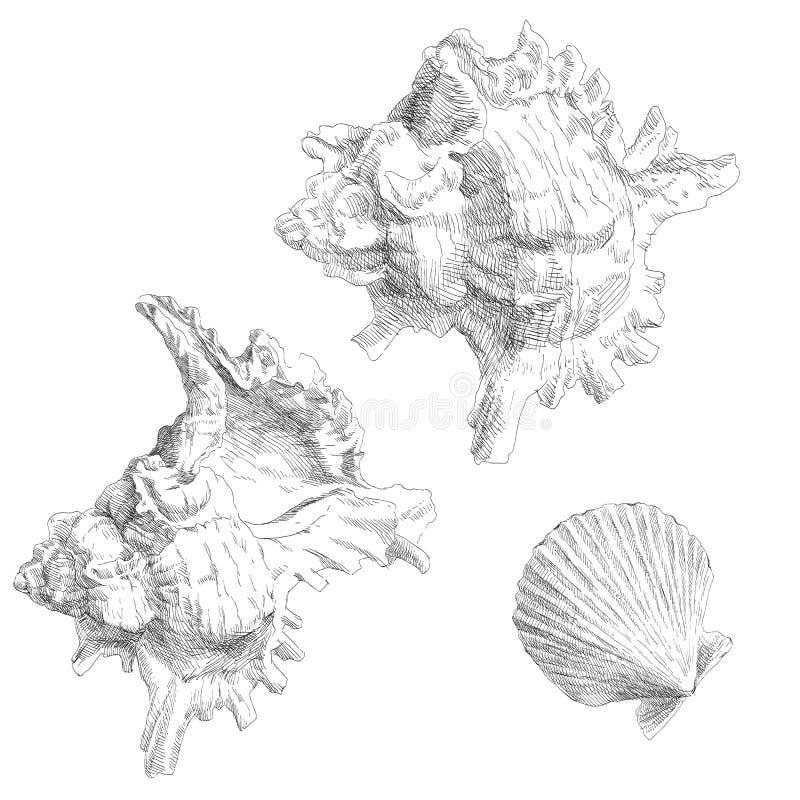 Insieme di varie conchiglie royalty illustrazione gratis
