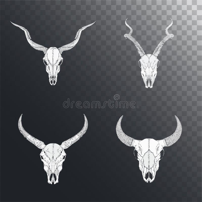 Insieme di vettore dei crani disegnati a mano degli animali cornuti: toro, bufalo selvaggio ed antilopi su fondo scuro royalty illustrazione gratis