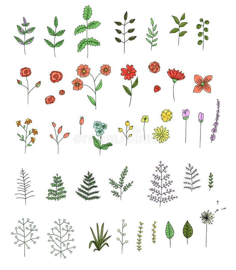 Insieme di vettore dei fiori colorati, erbe, piante royalty illustrazione gratis